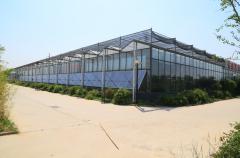 阳光板温室大棚有什么优点?点击查看更多